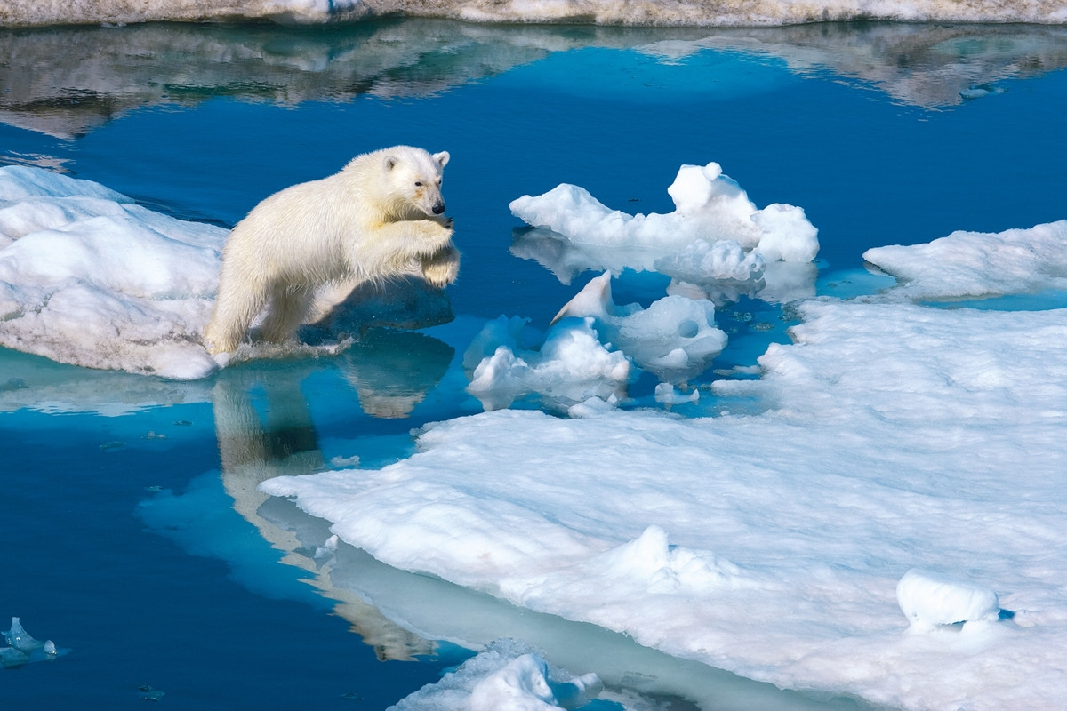 Clementoni - Polar Bär